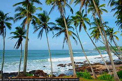 158 (Dhammika Heenpella / Images of Sri Lanka) Tags: travel sea vacation holiday travelling tourism beach nature landscape happy coast interesting scenery asia calendar outdoor south southern coastal scenary vista environment srilanka southeast visitors lk scape enjoying downsouth coconuttrees holidaying tangalle scenicbeauty placesofinterest photosof tangalla southernprovince dhammikaheenpella paraiwella paraviwella theimagesofsrilanka heenpalla visitsrilanka2011