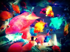 Aquarium (SweetsBunny) Tags: fish colors japan aquarium tokyo colorful odaiba aquacity