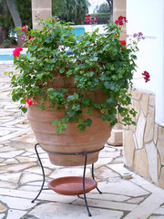 Flower Pot (RobW_) Tags: flower wednesday hotel december pot greece spa 2010 galini kamena vourla ftiotida dec2010 29dec2010