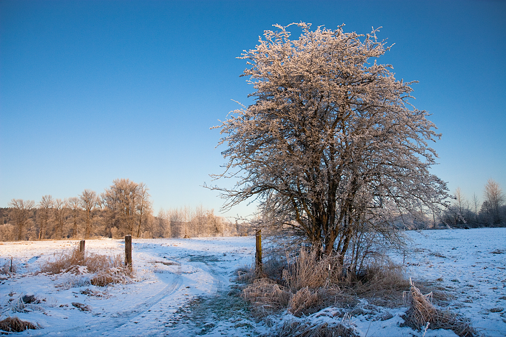 TreeHortizontal_6378