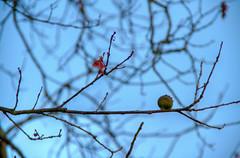 CARBALLO, HDR (II) (dfvergara) Tags: arboles mio hdr salvaterra carballo acanuda