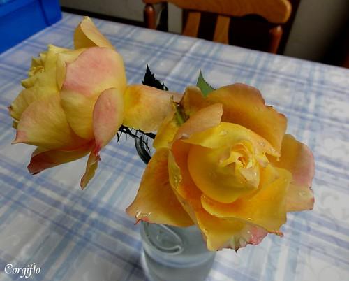 blog-110105-zJardin-2
