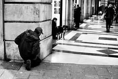 The call of the man (Maurizio Costanzo - mavik2007) Tags: street people blackandwhite bw dog cane calle call strada gente candid streetphotography persone bianconero biancoenero maurizio blackwhitephotos fotografiacallejera streepher it5 fotografiadistrada nikonflickraward mavik2007 thecalloftheman