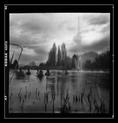 etang3 (scharras) Tags: film nature blackwhite noir trix pinhole blanc canard etang stenope
