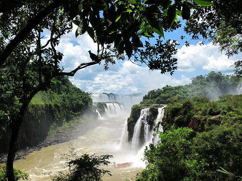 The Falls With a Vulture - Iguazu Falls, Argentina