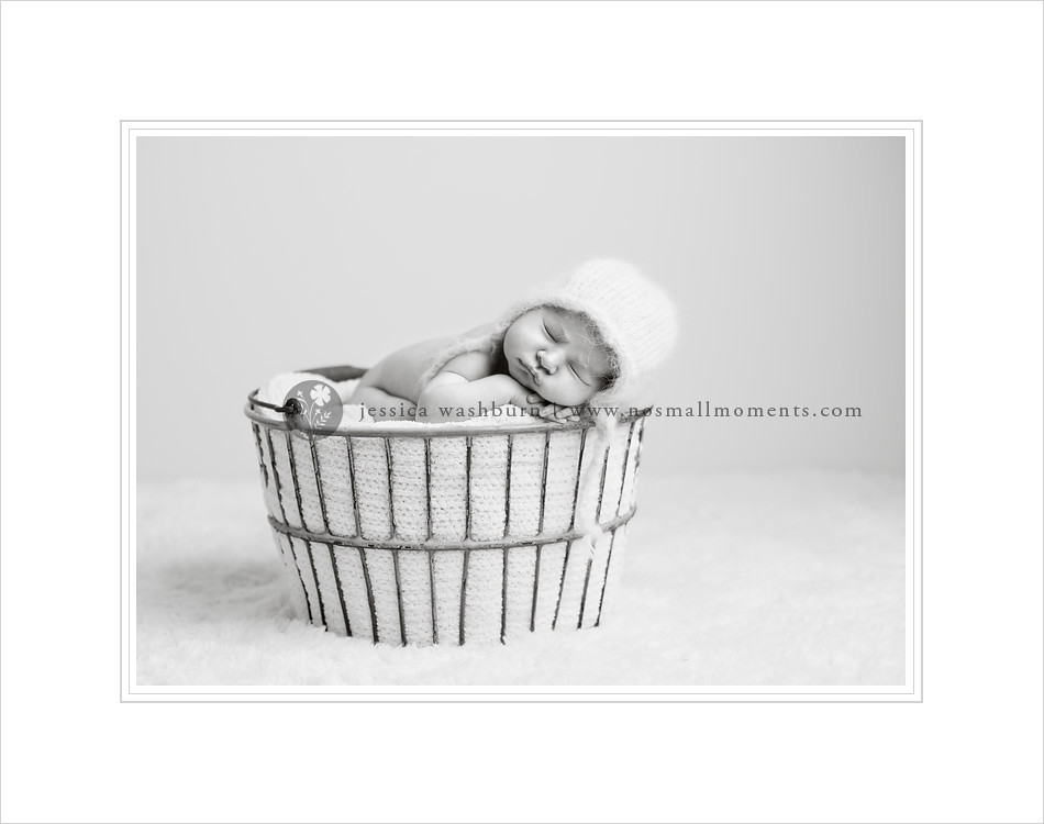 Albany-newborn-photographer