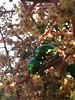 Green chrome couple ([sdfv]) Tags: verde green cali bugs chrome cromados metalizado cucarron santiagodefranciscovela sdfv