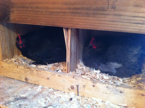 In Nesting Boxes