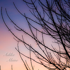 Day 33 Outtake. (ashlee.alaine) Tags: sunset tree bare cropped leafless 365outtake 2011inphotos