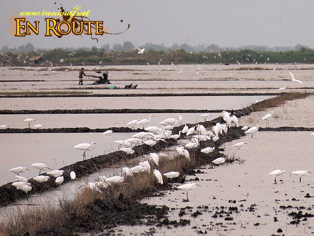 Agriculutral development encroaching into the wetland reserve