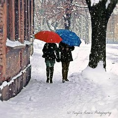 Flickr. Flickr Colors. Girls and Umbrellas. Pirot, Serbia. Tanjica Perovic Photography. (Tanjica Perovic) Tags: red umbrella blue twoumbrellas snow winter twogirlswalking snowing tree flickr pirot serbia srbija sigma1770mmf2845dcmacro pirotski pirotskicilim pirotsrbija tanjicaperovic тањицаперовић photography pirotserbia tanjicaperovicphotography фотографија fotografija friends friendship companionship two pair twogirls dreamy atmospheric atmosphere idyllic dreamlike beautiful path snowypath snowflakes winterwonderland snowingwonderland boots coats redandblue catchycolorsblue catchycolorsred зимаснежная fotografijepirota throughherlens