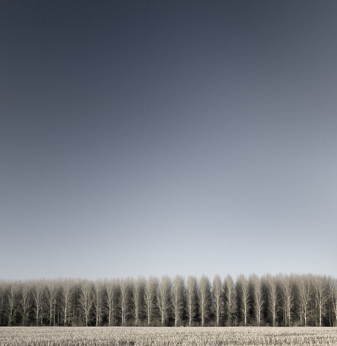 [フリー画像] 自然・風景, 樹木, 201101211900