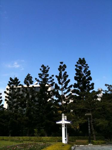 高聳的樹與藍天