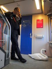 Zwaan met de trein (bogers) Tags: netherlands train swan track ns rail railway delft railways bogers bkk trein spoor ov openbaarvervoer zwaan nederlandsespoorwegen 20110122 detailns