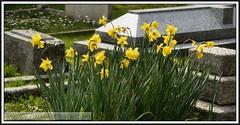 P1160675 Weymouth Cemetery  30.03.14 (A.P.PHOTOGRAPHY.) Tags: flowers views dorset weymouth gravestones weymouthcrematorium quibolaneweymouth weymouthcemetery