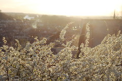 Dusk on France (lilacandhoney) Tags: flowers light france flower nature colors french early spring twilight colours dusk april moment avril printemps français amboise 2014