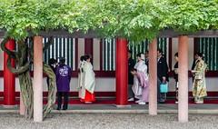 Japanese traditional wedding(2) Tokyo  Hieda-shrine (sapphire_rouge) Tags:  hiedashrine     japan tokyo wedding