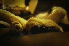 fede sleepy (El otro ilustrador...) Tags: sleeping pet cat gato mascota durmiendo