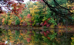 looking glass (bdaryle) Tags: autumn trees color reflection fall nature water sony 100commentgroup brandondaryle bdaryle imagesbybrandon