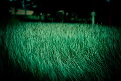 (Isai Alvarado) Tags: cinema blur film field grass rain 35mm dark movie lomo bush nikon focus dof darkness forrest bokeh air cine cinematic dx d80