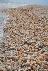 Beach of Shells at Stump Pass State Park, Florida (Damon Tighe) Tags: park usa shells america state florida north pass stump northamerica fl