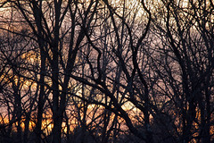 branches bare