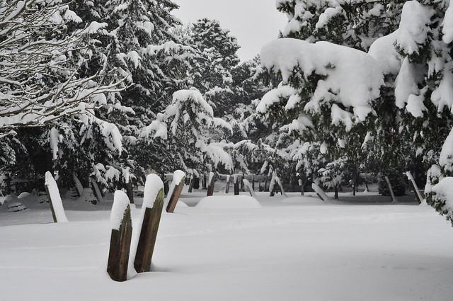 Snow graveyard