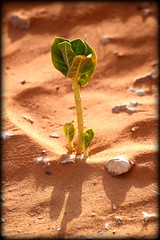 New life ... Foliage!  ...  ! (Crazy Ali Fahad) Tags: plant green nature sand micro mad    thallus