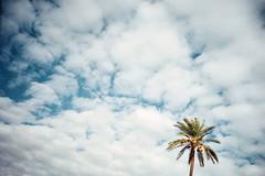 , (Benedetta Falugi) Tags: analog film palm napoli sky wwwbenedettafalugicom believeinfilm analogphotography