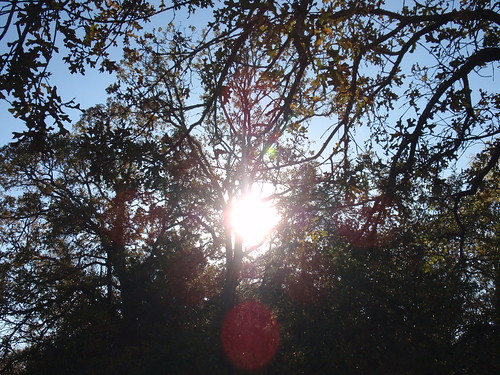 Sunshine and Branches