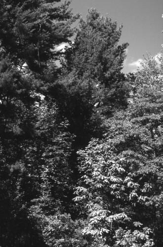 Pine Hollow Arboretum, Slingerlands, N.Y.