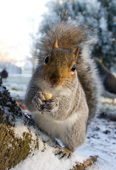 The Cutest Squirrel Ever! :) (jontlaw) Tags: gardens squirrel leamington spa warwickshire jephson explored