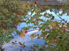 Railroad Pond (sewing punzie) Tags: autumn trees red sky orange plants plant reflection tree green fall water leaves fence reflections leaf pond flora branch branches newengland fences changing change greenery slouds sloud sooc railroadpond