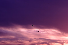 Into the Sunset (M.Christian) Tags: camera sunset sky usa white black art nature colors birds clouds canon photography flying photo purple flight picture photograph avian