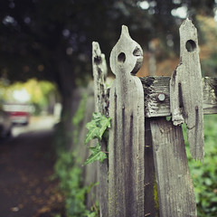(Karen.Strolia) Tags: wood broken leaves fence peekaboo lalala splinters 24mmf14 orcare d700 onastroll withmybeast itshisfavoritemarkingspot butyouprobablydontreallyneedtoknowsuchdetails