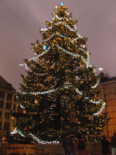 gartine in december 017