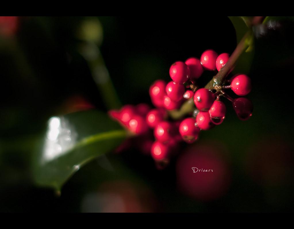 Day 127, 127/365, Project 365, Bokeh, Strobist, berries, red, 50mm, Sigma 50mm F1.4 EX DG HSM