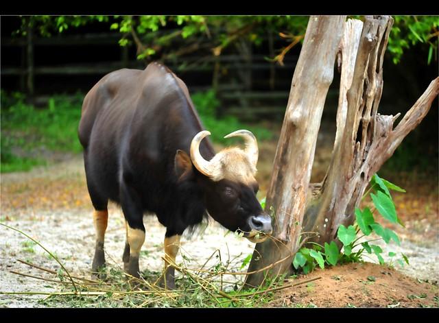 Zoo Taiping 4