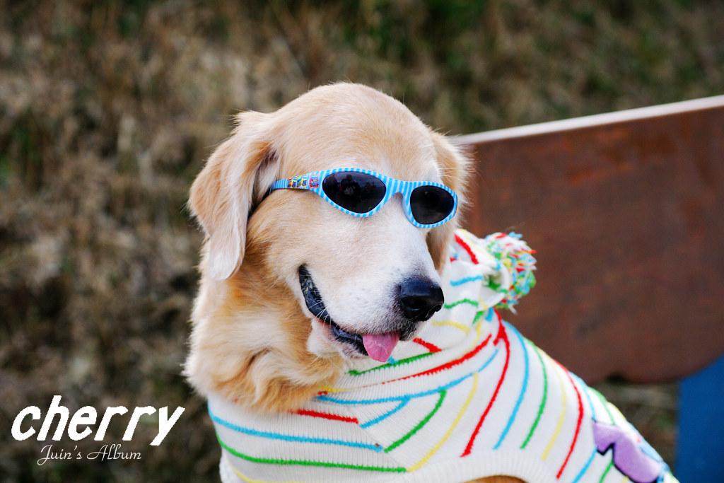 PENTAX的好連狗都知道-Cherry-