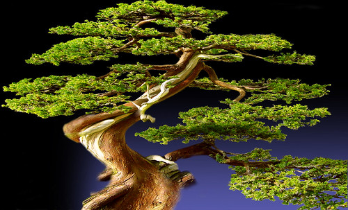 """Bonsai 084 • <a style=""""font-size:0.8em;"""" href=""""http://www.flickr.com/photos/30735181@N00/5261933954/"""" target=""""_blank"""">View on Flickr</a>"""
