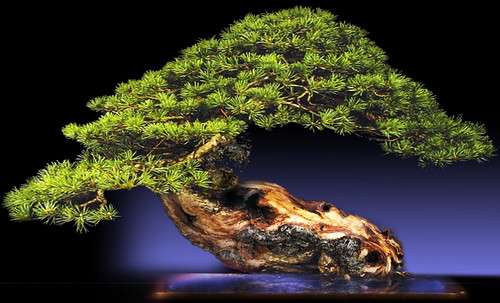 """Bonsai054 • <a style=""""font-size:0.8em;"""" href=""""http://www.flickr.com/photos/30735181@N00/5261941960/"""" target=""""_blank"""">View on Flickr</a>"""