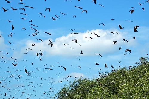 Bats of Riung