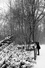 (...storrao...) Tags: trees blackandwhite bw snow berlin germany garden deutschland nikon pb mitte pretoebranco tiergarten d90 storrao sofiatorrão nikond90bw