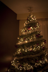 Christmas Tree (A Great Capture) Tags: christmas xmas holiday tree december ald ash2276 ashleyduffus ald ashleysphotographycom ashleysphotoscom ashleylduffus wwwashleysphotoscom