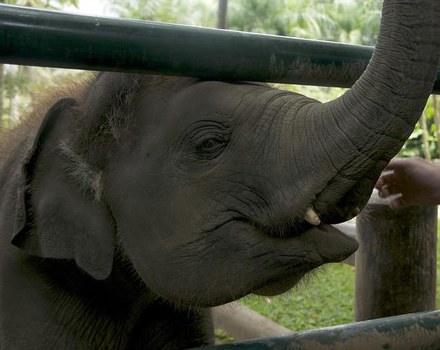 Elephant 09