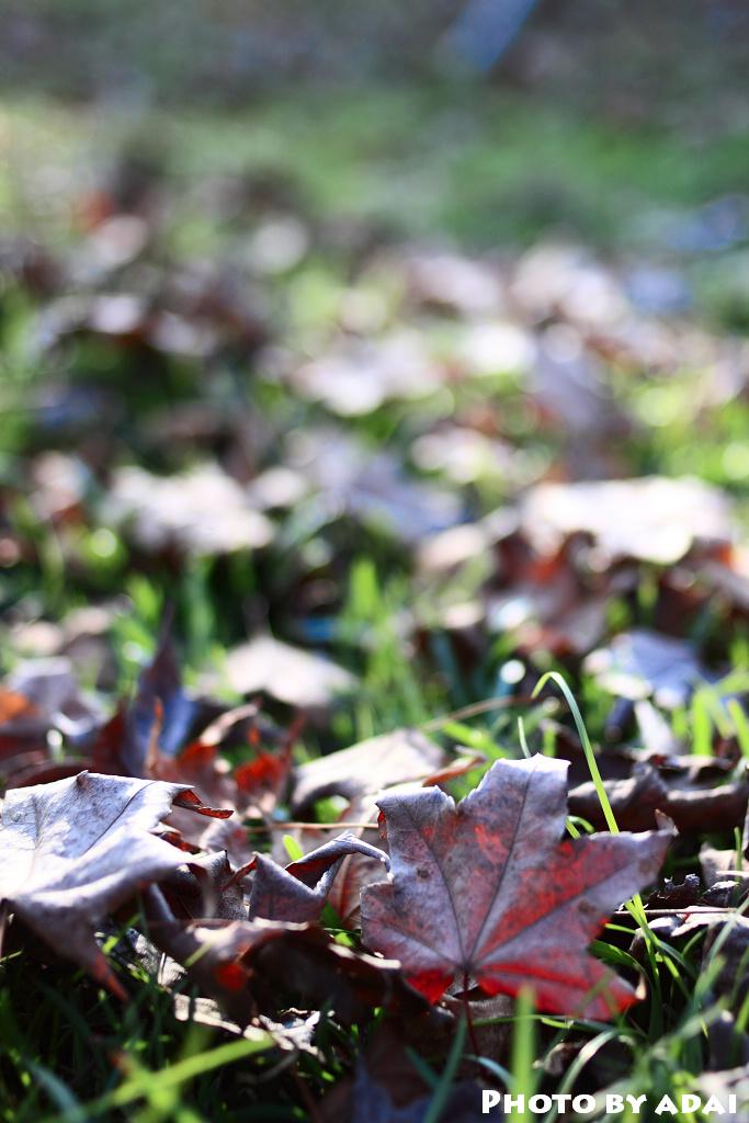 2010.12.19 新社莊園