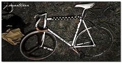 J. Martinez shot w/ Witcomb (Jack Crank) Tags: bike bicycle jack track bikes gear fixed rap steed crank bareknuckle witcomb pogliaghi tarck retardedshit