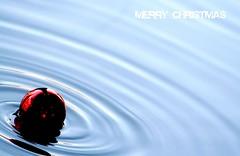 è qui la festa? (mario bellavite) Tags: christmas red italy water ball shot floating best merry fotografia festa natale reflexions merano buon 2011 acque nataleconituoi galleggiante mywinners bellavite mariobellavite bestverona christmas2011 natale2011