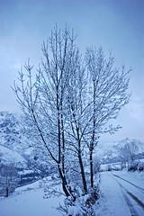let there is snow (rakelilla/robin) Tags: white snow blanco robin nikon nieve asturias raquel asturies ladines sobrescobio sobrescobiu rakelilla nieveasturias nieveasturies letthereissnow