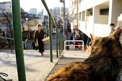 谷中銀座と猫